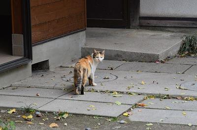 ワサビ色の猫