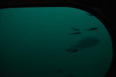 かすかに魚影