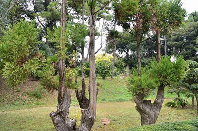 都道府県の森