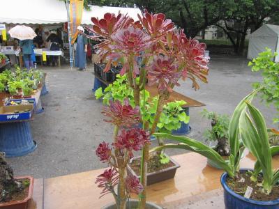 20100525花緑フェア09(再作成)