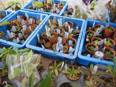20100525花緑フェア02(再作成)