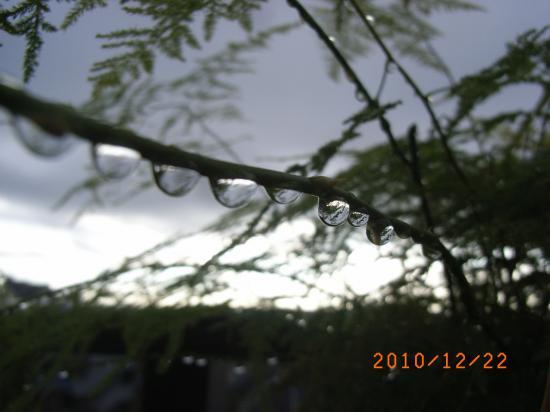 雨粒たまたま