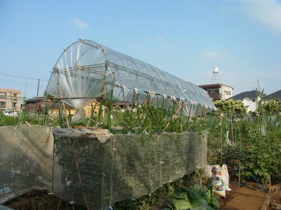名人のトマト屋根