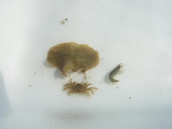 海辺の生き物