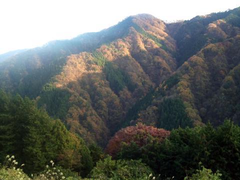 風張林道3