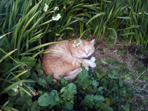城ヶ島のネコ1
