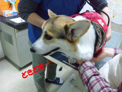 biddy201102-05.jpg