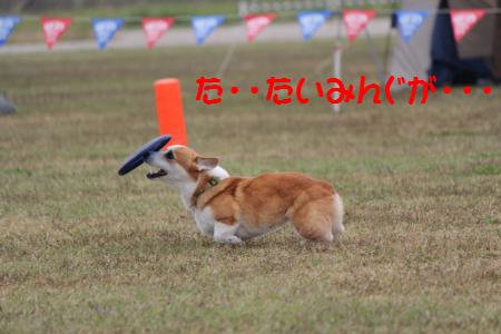 biddy201111-14