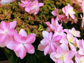 fc2blog_20120415145206e13.jpg