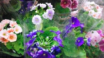 iphone_20120122181000.jpg