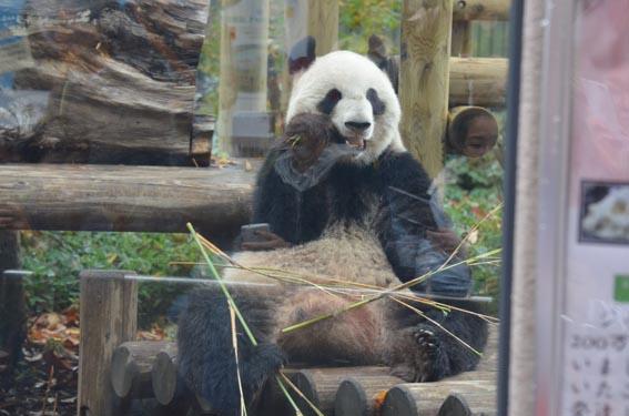 panda_20141130_DSC_6620.jpg