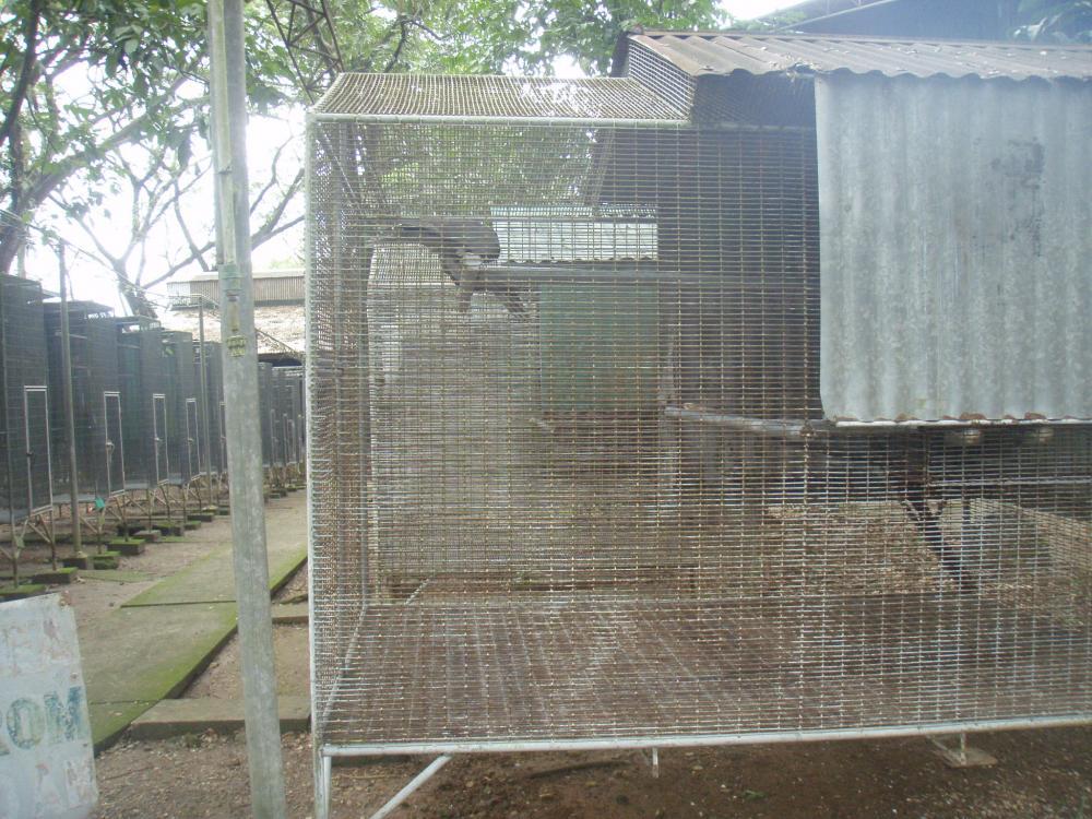クロインコ禽舎