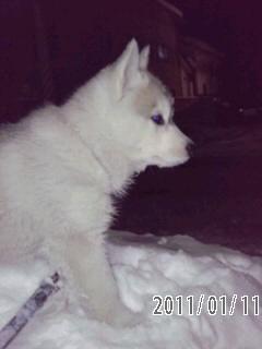 11-01-11-5雪の中