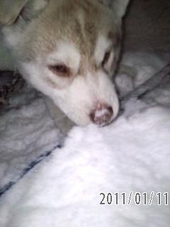 11-01-11-4雪の中