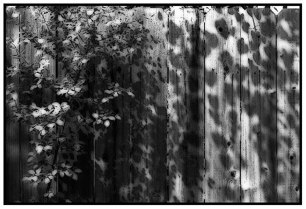 fragment26-soft-blog.jpg