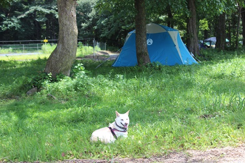 IMG_6165キャンプ場