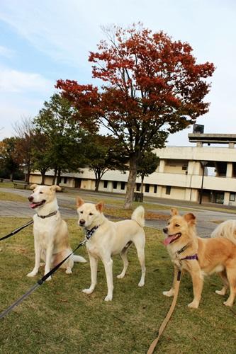 IMG_7744総合公園