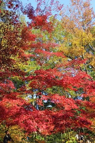 IMG_8130森林公園