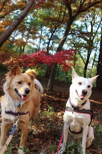 IMG_8114森林公園