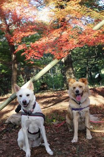 IMG_8147森林公園