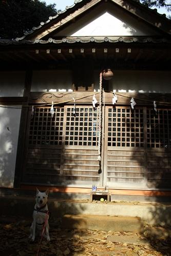 IMG_8265嵐山