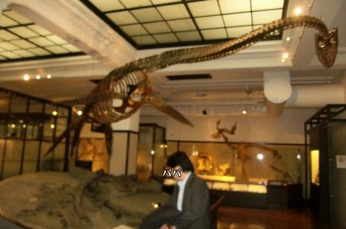 010恐竜