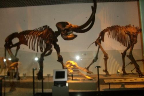 032恐竜