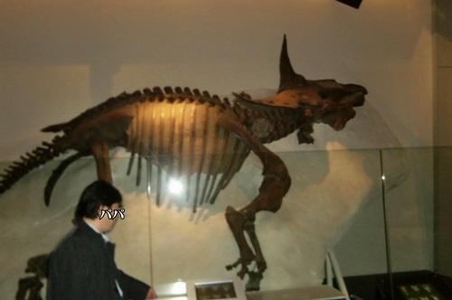 037恐竜