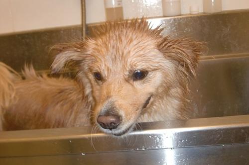 018お風呂