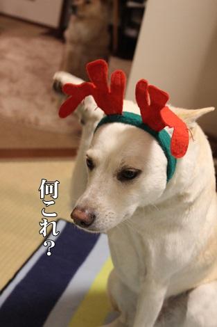 IMG_8876トナカイ