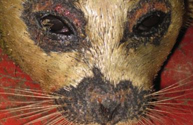 seal-face-386.jpg