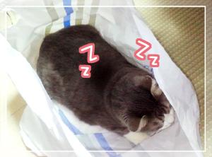 ネコと袋04