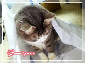 ネコと袋02