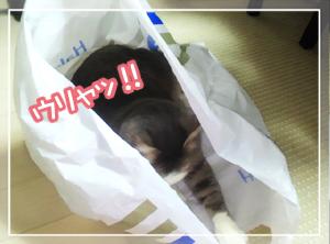 ネコと袋03