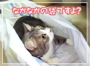 ネコと袋01