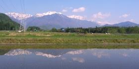 桜2011051800