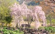 桜2011051801
