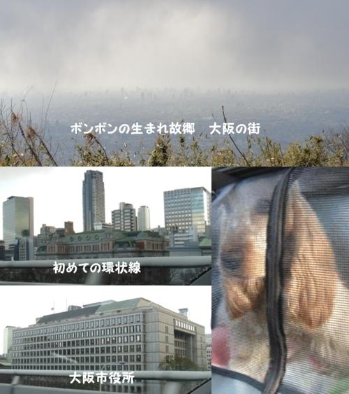 20110309-1601-22.jpg