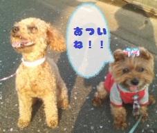 ニコちゃんとロッタ