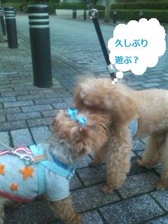 小太郎君と