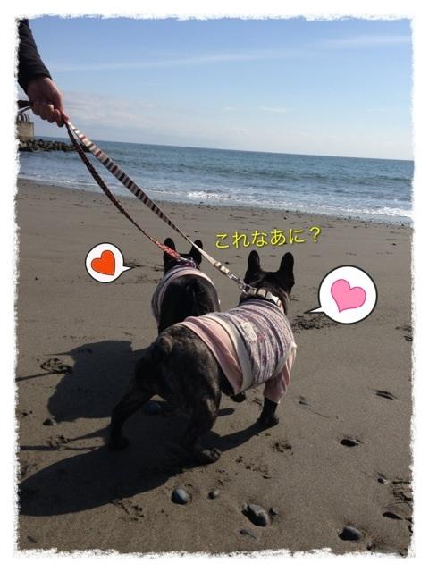 image_20130211234421.jpg
