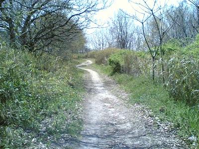春の小道ミニ