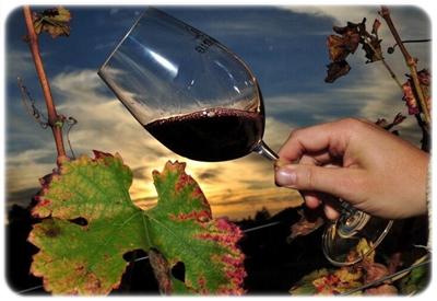 ブラジルのワイン