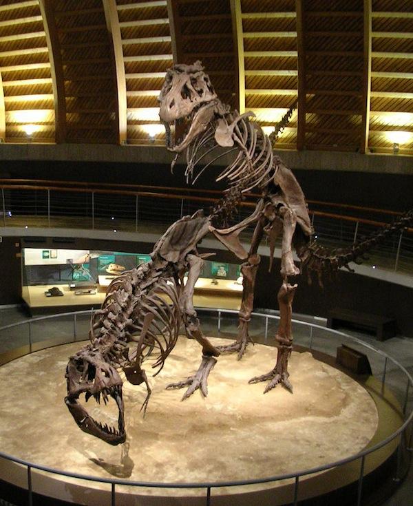 burakiosaurosu2031
