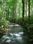 小渓流だが増水気味
