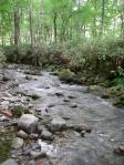 ニジマスの小渓流