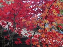 本行寺の紅葉