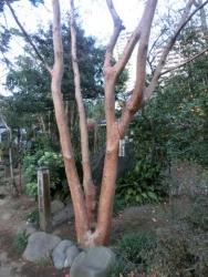 姫沙羅と道灌丘碑