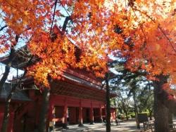 増上寺の紅葉2013.12.22