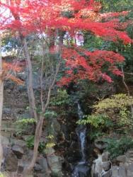 芝公園の紅葉滝 2013.12.22